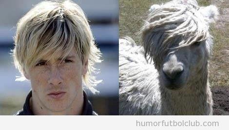 Fernando Torres tiene un parecido razonable con una llama o alpaca