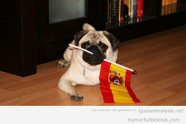 Perro carlino con una bandera de España en la boca