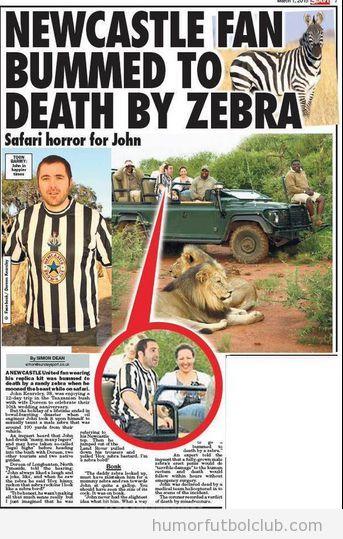 Aficionado camiseta Newcastle confundido con cebra en safari
