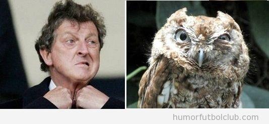 Parecido razonable Roy Hodgson, seleccionador fútbol inglaterra y buho