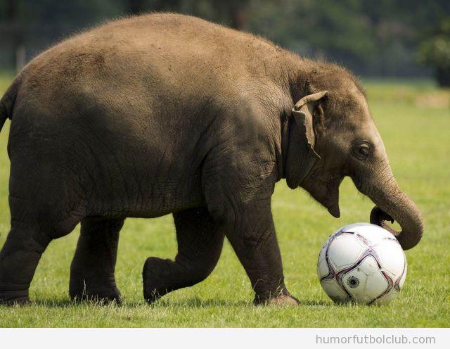 Elefante con un balón de fútbol gigante