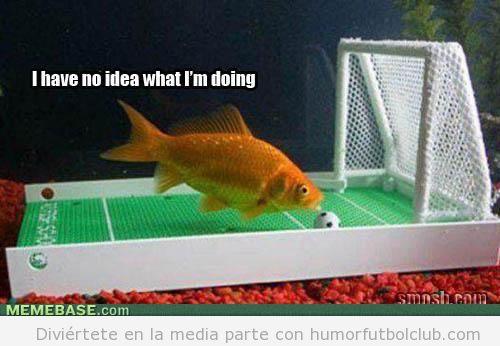 Pecera con un campo de fútbol y un pez jugando