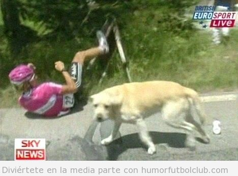 Perro labrador tira al suelo a un ciclista al suelo en el Tour de France