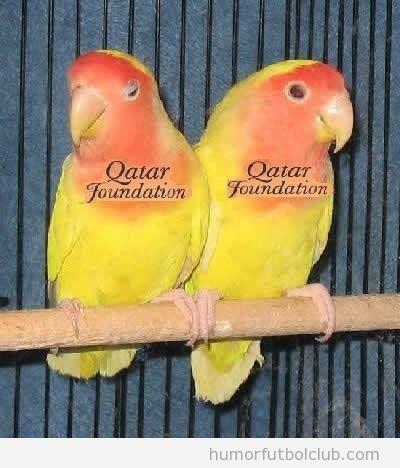 Dos loros amarillo y naranja con logo Qatar Foundation, segunda equipación del Barça