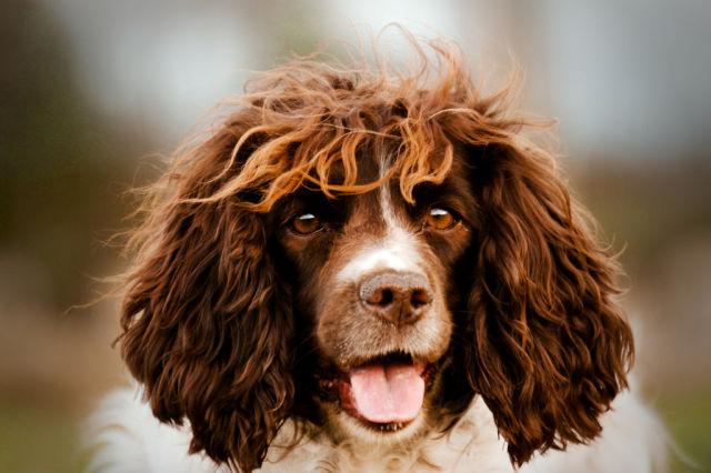 Perro parecido al jugador del Barça Carles Puyol