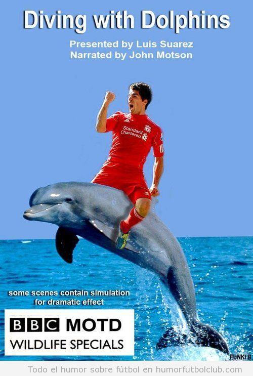Documental Diving with dolphins Luis Suarez