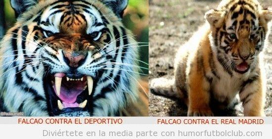 Foto graciosa de tigre y cachorro que compara a Falcao ante el Depor  ante el Real Madrid