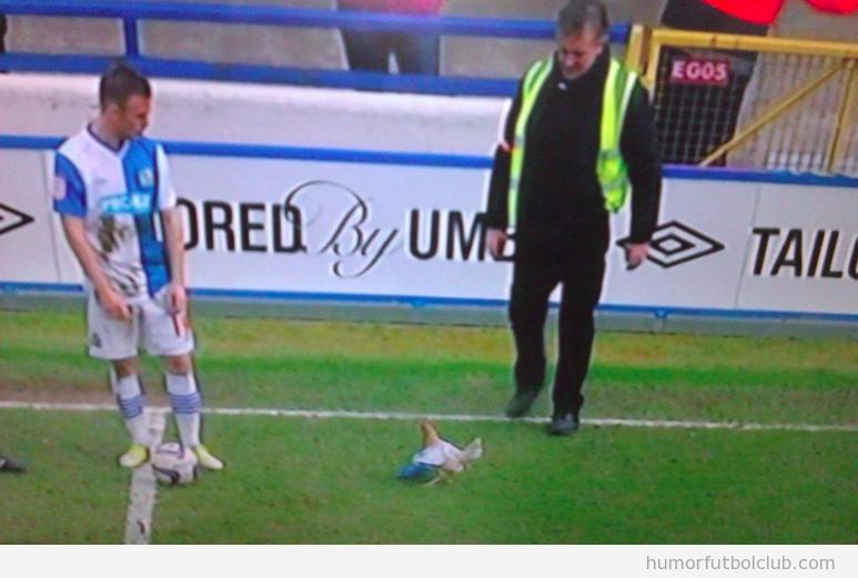 Gallina en el terreno de juego del Blackburn vs Burnley