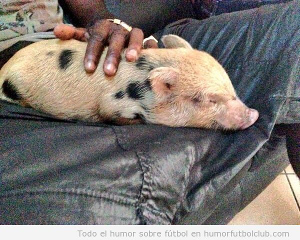 El cerdo de Balotelli se llama Super