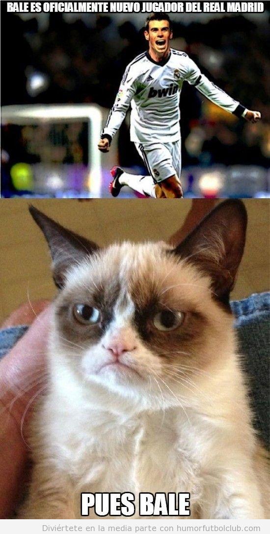 Meme gracioso fútbol, grumoy cat y el fichaje de Bale por el Madrid