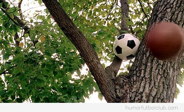 Balón de fútbol colgado en el árbol